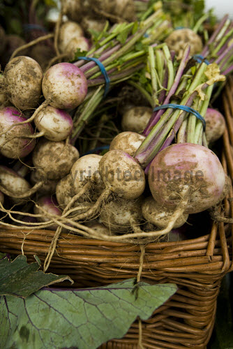 TURNIPS FOR SALE AT THE FARMER'S MARKET, CASTLE TERRACE, EDINBURGH. PIC: DOUGLAS JONES/SCOTTISH VIEWPOINT  Tel: +44 (0) 131 622 7174  Fax: +44 (0) 131 622 7175  E-Mail: info@scottishviewpoint.com  Web: www.scottishviewpoint.com  This photograph cannot be used without prior permission from Scottish Viewpoint. FOOD,EATING,RETAIL,SPECIALISED,SWEDE,PRODUCE,VEGETABLES DOUGLAS JONES/SCOTTISH VIEWPOINT
