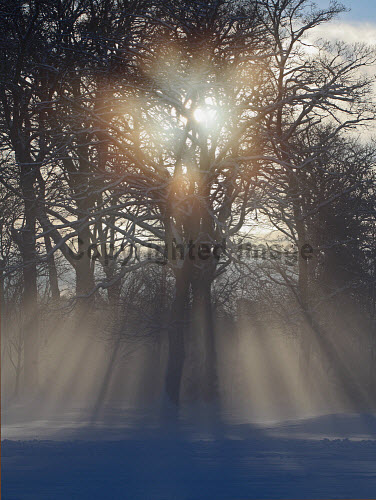 Freezing mist, Buckstone wood, Edinburgh.