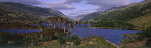 LOOKING OVER TO LOCH EILT-A NARROW LOCH BETWEEN LOCHAILORT AND GLENFINNAN IN THE LOCHABER DISTRICT, CLOSE TO WHERE THE WEST HIGHLAND LINE SKIRTS THE WATER'S EDGE, HIGHLAND. PIC: PAUL TOMKINS/VisitScotland/SCOTTISH VIEWPOINT Tel: +44 (0) 131 622 7174   Fax: +44 (0) 131 622 7175 E-Mail : info@scottishviewpoint.com This photograph can not be used without prior permission from Scottish Viewpoint. ROAD TO THE ISLES,ISLAND,SUMMER,WATER,MOUNTAIN,SUNNY,SCOTS PINE,HILL