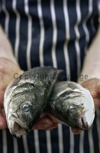 FRESH FISH AT FISHMONGERS PRODUCE,LOCAL,FOOD,FRESH,PROVENANCE,INGREDIENT,INGREDIENTS,RAW,TWO,2,HEADS,HEAD,PEOPLE,HANDS,HAND,APRON,MOUTHS,MOUTH,OPEN