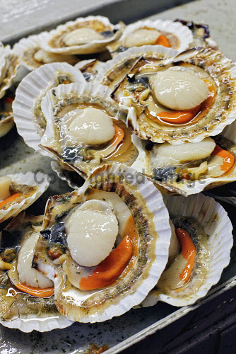 FRESH SCALLOPS IN THE SHELL shellfish,food,fresh,seafood,produce,product