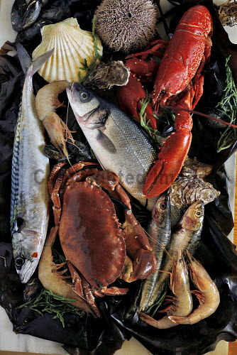 a platter of mixed fresh seafood and fish shellfish,food,fresh,seafood,produce,product,crabs,crab,urchins,urchin,platter,prawns,prawn,lobster,lobsters,salmon,no people