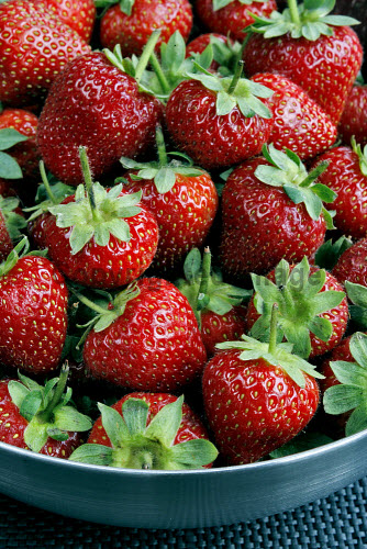 FRESH STRAWBERRIES FROM FIFE. food,no people,peel,produce,crop,crops,prepare,preparation,berry,berries,summer,strawberry