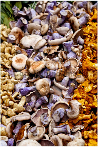 An assortment of fresh mushrooms for sale at a greengrocers. food,eat,eating,ingredient,ingredients,cooking,cook,produce,fresh,assortment,mushroom,mushrooms,shop,shopping,sale,for,greengrocer,greengrocers,fungi,retail,specialised,farm
