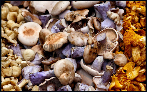 An assortment of fresh mushrooms for sale at a greengrocers. food,eat,eating,ingredient,ingredients,cooking,cook,produce,fresh,assortment,mushroom,mushrooms,shop,shopping,sale,for,greengrocer,greengrocers,fungi,retail,specialised