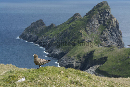 The archipelago of St Kilda, Outer Hebrides, Scotland uk,u.k,Great Britain,GB,G.B,Scotland,Scottish,nobody,outdoors,daytime,Summer,st kilda,Outer Hebrides,world heritage site,archipelago,coast,coastal,coastline,water,sea,island,islands,hirta,great skua