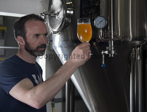 Windswept Brewery Lossiemouth   Al Read � Operations Director tests the beer   PIC  TREVOR MARTIN /HIE 2018,brewing,brewery,beer,product,bottles,bottle,windswept,production,glass,glasses