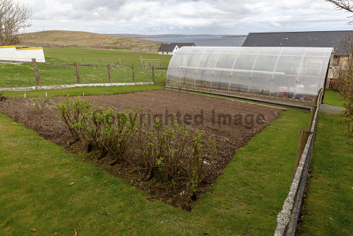 Seen here a polycrub, Ollaberry, Shetland  Picture Credit Ben Mullay/HIE 2018,polytunnel,crops,growing,shetland