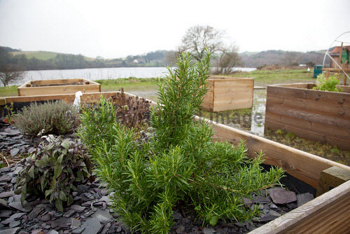 The Fife Ecology Centre, Kinghorn. 17 Feb 2016.   Raised flower beds Picture Credit Tina Norris /HIE 2016,Fife Ecology Centre,HIE,ecology,gardening