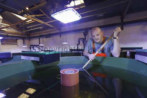 Loch Duart Salmon  A staff member in the salmon hatchery  Picture Credit : Gary Doak 2016,Loch Duart,salmon,aquaculture,sutherland,badcall,fishing,workers,worker,fish