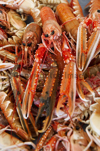 JPL Shellfish, Scrabster, Caithness, Highland..Highlands and Islands Enterprise is supporting the company, enabling it to develop its business..Pictured here some langoustine..16.01.13..Picture Credit: Angus Mackay /HIE 2013,highlands,islands,enterprise,fish,food,produce,expansion,international,market,markets,fishing,industry,local,locally,sourced