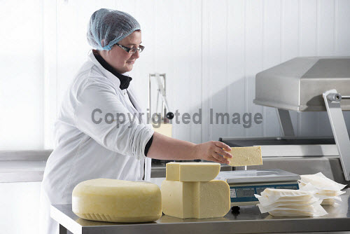 Connage Highland Dairy - organic dairy farm selling a distinctive collection of handcrafted farmhouse cheeses, Milton of Connage, Inverness, Highlands of Scotland.  Pictured here weighing the cheese prior to packaging.  Picture Credit : John Paul / HIE 2013,interior,highland,islands,enterprise,family,business,traditional,farming,agriculture,product,production,manufacture,weighing,scales,food