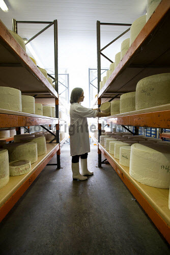 Connage Highland Dairy - organic dairy farm selling a distinctive collection of handcrafted farmhouse cheeses, Milton of Connage, Inverness, Highlands of Scotland.