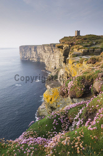 The cliffs at Marwick Head - a RSPB nature reserve with the Kitchener Memorial visible, Mainland, Orkney..Picture Credit : Iain Sarjeant. 2012,island,islands,isle,isles,summer,sunny,coast,coastal,coastline,rock,rocks,rocky,cliff,cliffs,thrift,flora,flower,flowers,plant,plants,wild,dramatic,water,scenic
