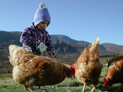 A young girl feeding hens on a croft, Isle of Skye, with a view to mountains beyond, Inner Hebrides.  Picture Credit : Andy Law / HIE 2008,highlands,islands,enterprise,winter,sunny,scenic,island,isle,isles,crofting,small,holding,agriculture,farm,farms,farming,fauna,child,children,kid,kids,family,families,livestock,hen,chicken,chickens,bird,birds,highland