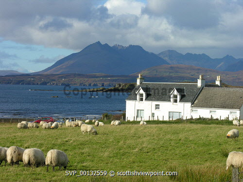 Sheep grazing in a field by a cottage, Isle of Skye, with a view to the Cuillin mountains beyond, Inner Hebrides.  Picture Credit : Andy Law / HIE 2008,highlands,islands,enterprise,autumn,sunny,scenic,island,isle,isles,croft,crofting,small,holding,agriculture,farm,farms,farming,livestock,animal,animals,graze,fields,coast,coastal,coastline,water,sea,cuillins,mountain,highland