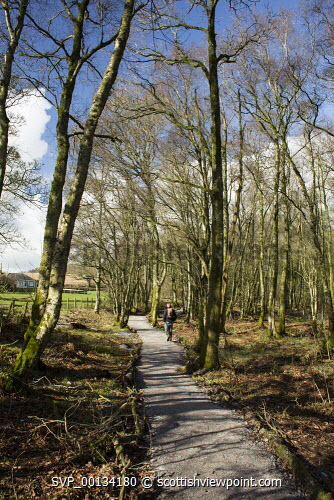 Walking under the trees in early spring around Castle Loch at Lochmaben, Annandale, Scotland walk walking walker dog River Annan river Calf Lake Corepath core path Council Royal Four Towns Heck,tree trees branch cover covered spring Castle Loch nature reserve Lochmaben