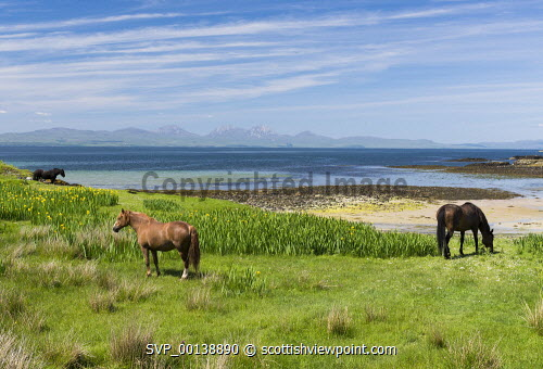 Shoreline horse grazing,Isle of  Gigha, Inner Hebrides horses,ponies,blue sky,bright,hebridean,high pressure,peaceful,restful,summer,sunny,tranquil,aqumarine,colourful,scotland,beach,beaches,sand,sandy,coast,coastal,coastline,water,sea,island,islands,isle,isles