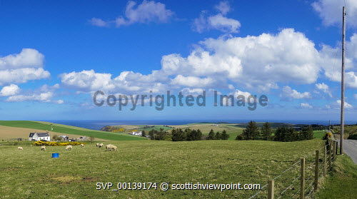 Farming and sea cliffs, near Pennan, looking to Moray Firth, Aberdeenshire, Scotland UK Panorama,near,Pennan,village,cliffs,coastline,farming,fields,sheep,landsacape,Moray,Firth,Coast,Aberdeenshire,sunny,quiet,lonely,isolated,agriculture,livestock,animal,animals,graze,grazing,farm,farms,countryside