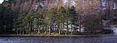 A stand of Caledonian pine trees by the edge of Loch an Eilein in the Highland during the winter months, Badenoch and Strathspey, near Aviemore. PIC: IAN PATERSON/SCOTTISH VIEWPOINT Tel: +44 (0) 131 6... COLD,WOODLAND,WOOD,WATER,TREE,SNOW,SCOTLAND,PANORAMIC,ICE,FOREST