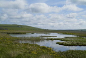 The RSPB nature reserve at The Loons, Birsay, Mainland, Orkney. PIC: DOUG HOUGHTON/SCOTTISH VIEWPOINT  Tel: +44 (0) 131 622 7174  Fax: +44 (0) 131 622 7175  E-Mail : info@scottishviewpoint.com  This p... DOUG HOUGHTON/SCOTTISH VIEWPOINT moor,wetland,snh,royal,society,protection,birds,scottish,natural,heritage,sanctuary,conservation,nature,reserve,reserves,ecotourism,ecotourist,environment,environmental,eco,system,ecosystem,ecosystems