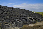 Tractor and car tyres weighing down black plastic covering on silage pit   PIC: DOUG HOUGHTON/SCOTTISH VIEWPOINT  Tel: +44 (0) 131 622 7174  Fax: +44 (0) 131 622 7175  E-Mail : info@scottishviewpoint.... DOUG HOUGHTON/SCOTTISH VIEWPOINT silo,winter,feed,forage,foraging,fodder,storage,store,farming,agriculture,agricultural,industry,agronomy,wrap,warps,wrapped,cover,covers,covered,covering,farm,orphir,orkney,north,scotland,scottish,isl