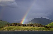 A RAINBOW AND DARK BROODING SKY MAKE A DRAMATIC BACKDROP TO INVERIE,KNOYDART. PIC : GARY DOAK/SCOTTISH VIEWPOINT  Tel: +44 (0) 131 622 7174  Fax: +44 (0) 131 622 7175  E-Mail : info@scottishviewpoint.... LOCH,NEVIS,KNOYDART,INVERIE,RAINBOW,FORESTRY,PINE,TREES,MOUNTAIN,DARK,CLOUD,WEATHER,DRAMATIC