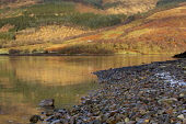 Reflections in Loch Leven at the village of Invercoe, near Ballachulish.Highlands, Scotland. Photographed in December. PIC: LEE BEEL/SCOTTISH VIEWPOINT Tel: +44 (0) 131 622 7174   Fax: +44 (0) 131 622... LEE BEEL/SCOTTISH VIEWPOINT ballachulish,beautiful,beauty,britain,british,calm,clear,climb,climbing,coe,cold,country,countryside,crisp,day,december,edge,empty,extreme,fresh,frosted,froze,frozen,great,glen,highland,highlands,hill