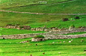 LOOKING OVER TO THE RUINED REMAINS OF MAIN STREET, VILLAGE BAY, ON HIRTA, ONE OF THE ISLANDS IN THE ST. KILDA ARCHIPELAGO - A NATURE RESERVE IN THE HANDS OF THE NATIONAL TRUST FOR SCOTLAND, IN THE ATL... ABANDONED,RUINS,RUIN,ISLAND