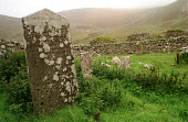 GRAVESTONES IN THE STONE-WALLED GRAVEYARD IN VILLAGE BAY (WITH GRASS-ROOFED CLEITS BEYOND THE BOUNDARY) ON HIRTA, ONE OF THE ISLANDS IN THE ST. KILDA ARCHIPELAGO - A NATURE RESERVE IN THE HANDS OF THE... CHURCHYARD,WATER,SUNNY,RELIGION,ISLAND,COAST