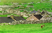 LOOKING OVER TO THE RUINED REMAINS AND SOME RESTORED COTTAGES OF MAIN STREET, VILLAGE BAY, ON HIRTA, ONE OF THE ISLANDS IN THE ST. KILDA ARCHIPELAGO - A NATURE RESERVE IN THE HANDS OF THE NATIONAL TRU... ABANDONED,RUINS,RUIN,ISLAND