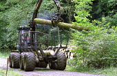 Forestry, harvestor tractor cutting trees in the forest forestry,felling,cutting,trees,forest,logs,logging,mechanisation,conifers,brashing,tractors,machines,woods,harvest,fell,timber,production