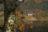 LOOKING OVER THE CALM WATER OF LOCH ACHRAY (WITHIN THE QUEEN ELIZABETH FOREST PARK) TO TIGH MOR HOUSE- THE FORMER TROSSACHS HOTEL AND NOW A HOLIDAY PROPERTY BOND COMPLEX, WEST OF CALLANDER. PIC: ALLAN... ACCOMMODATION,WATER,TRUNK,TREE,REFLECTION,LOCH,FORESTRY,AUTUMNAL,AUTUMN