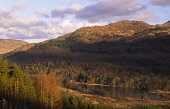 Looking across from Rig of Stroan to Loch Trool in the Galloway Forest Park and Mulldonoch behind all catching the late winter afternoon sunshine. Dumfries & Galloway PIC: ALLAN DEVLIN/SCOTTISH VIEWPO... ALLAN DEVLIN/SCOTTISH VIEWPOINT bruce,valley,uk,trool,trees,tree,scottish,scotland,scenic,robert,park,mountains,loch,landscape,lake,hills,hill,glen,galloway,forestry,forest