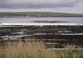 Thurso East - one of Scotland's best surfing waves, CaithnessDistrict, Highland.  PIC: A. BENNETTS/SCOTTISH VIEWPOINT Tel: +44 (0) 131 622 7174   Fax: +44 (0) 131 622 7175 E-Mail : info@scottishviewpo... A. BENNETTS/SCOTTISH VIEWPOINT Attraction,Bay,Coast,Coastline,Sea,Seascape,Sport,Surf,Surf competition,Surfboard,Surfing,Water,waves,Type of photograph Sport,Type of photograph Seascape,Other Keywords Sea,Other Keywords Surf,Other