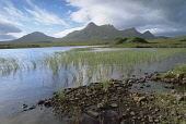 BEN LOYAL - (GAELIC : BEINN LAOGHAL) A MOUNTAIN IN THE SUTHERLAND DISTRICT FROM LOCHAN HAKEL, HIGHLAND. IAIN SARJEANT/SCOTTISHVIEWPOINT Tel: +44 (0) 131 622 7174  Fax: +44 (0) 131 622 7175  E-Mail : i... Public, NMR HIGHLANDS,SUNNY,SUMMER,WATER,SAND,SANDY,REEDS,GRASS,GRASSES