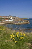Daffodil springtime flower and fishing village harbour  CRAIL FIFE  Pic: Doug Houghton / Scottish Viewpoint Tel: +44 (0) 131 622 7174 Fax: +44 (0) 131 622 7175 E-Mail: info@scottishviewpoint.com Web:... Public fife,crail,daffodils,springflowers,harbour,spring,fifeshire,shire,kingdom,east,neuk,coast,scotland,scottish,flowers,springtime,time,fish,fishing,town,community,coastal,local,village,settlement,rural,f