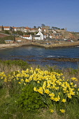 Daffodil springtime flower and fishing village harbour  CRAIL FIFE  Pic: Doug Houghton / Scottish Viewpoint Tel: +44 (0) 131 622 7174 Fax: +44 (0) 131 622 7175 E-Mail: info@scottishviewpoint.com Web:... Public fife,crail,flowers,springflowers,springtime,coast,village,fifeshire,shire,kingdom,east,neuk,scotland,scottish,spring,time,fish,fishing,town,community,coastal,local,settlement,rural,wildflowers,plants,