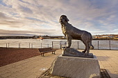 The larger than life-size bronze statue of Bamse at Montrose Harbour.  Bamse was a huge St. Bernard dog who lived during the 2nd World War.  Bamse was owned by Captain Hafto of the Norwegian Navy, and... Public Bamse,St.,Bernard,Dog,Statue,PDSA,Gold,Medal,Montrose,Dundee,Honningsvag,Norway,Minesweeper,Thorodd,military,mascot,sculptor,Alan,Herriot,WW2,WWII,World,War,Two,largest,in,the,Allied,Forces,Royal,Norw