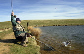 Fly fisher catching trout , Tweeddale, Borders PIC: Scott Whitelaw / Scottish Viewpoint TEL: +44 (0) 131 622 7174 FAX: +44 (0) 131 622 7175 E-MAIL: info@scottishviewpoint.com WEB: www.scottishviewpoin... Public, NMR fish,angler,angling,fishing,people