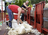 Sheep shearing, Isle of Skye, Scotland  Pic: Marcus McAdam / Scottish Viewpoint Tel: 0044 (0) 131 622 7174 Fax:0044 (0) 131 622 7175 E-Mail: info@scottishviewpoint.com Web: www.scottishviewpoint.com T... Public, NMR Agriculture,Animals,Cattle,Ewe,Farming,Great Britain,Highlands,Isle of Skye,Scotland,Sheep,Truck,UK,Wool