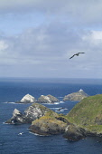 Herma Ness UNST SHETLAND Muckle Flugga lighthouse and Shetlands most northerly rocky coastline  Pic: Doug Houghton / Scottish Viewpoint Tel: 0044 (0) 131 622 7174 Fax: 0044 (0) 131 622 7175 E-Mail: in... Public, NMR shetland,unst,rocky,coast,crags,muckle,flugga,scotland,scottish,northern,light,house,board,nlhb,whitewash,whitewashed,washed,shipwreck,shipwrecking,shipping,warning,warn,naval,nautical,navigation,safe
