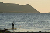 Bay of Ireland SCAPA FLOW ORKNEY Wading fisherman angler catching fish fishing off shore evening Hoy hills  Pic: Doug Houghton / Scottish Viewpoint Tel: 0044 (0) 131 622 7174 Fax: 0044 (0) 131 622 717... Public, NMR scapa,flow,angler,catching,fish,fishing,orkney,wading,fisherman,off,shore,evening,hoy,hills,bay,of,ireland,rod,angling,reeling,line,angle,anglers,fishermen,angles,landing,catch,catchs,caught,seawater,