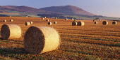 Harvest round straw bales catching the summer morning sunshine on the Solway Firth coast with Criffel behind near Dumfries Scotland UK  Picture Credit: Allan Devlin / Scottish Viewpoint Tel: +44 (0) 1... Public, NMR landscape,bales,straw,sunrise,morning,round,sunshine,solway,firth,coast,criffel,field,hill,harvest,scotland,scottish,uk