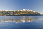 Snow capped Ben Lomond and Loch Lomond from Tarbet Argyll. Picture Credit: D. G. Farquhar / Scottish Viewpoint Tel: +44 (0) 131 622 7174 Fax: +44 (0) 131 622 7175 E-Mail: info@scottishviewpoint.com We... Public Scotland,UK,Britain,Scottish,EU,Snow,snow capped peaks,mountains,Loch Lomond,Tarbet,Ben Lomond,winter reflections,reflections,blue sky,winter,sunny