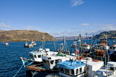 Fishing boats & boats at Portree harbour Portree Isle of Skye Highland Scotland  Picture Credit: D. G. Farquhar / Scottish Viewpoint Tel: +44 (0) 131 622 7174 Fax: +44 (0) 131 622 7175 E-Mail: info@sc... Public Portree,Scotland,Fishing,Fishing Boat,Fishing Boats,Natural Resource,Natural Resources,Resource,Resources,Boats,Harbour,Highland,Isle of Skye,Loch Portree,sunny