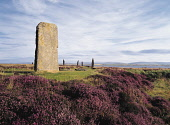 RING OF BRODGAR ORKNEY Heather and standing stones  Picture Credit: Doug Houghton / Scottish Viewpoint Tel: +44 (0) 131 622 7174   Fax: +44 (0) 131 622 7175 E-Mail : info@scottishviewpoint.com This ph... Public orkney,ring,brodgar,standing,stones,neolithic,site,scotland,scottish,stone,megaliths,menhirs,monolithic,henge,bronze,age,ancient,old,era,primitive,tradition,customs,cultural,heather,prehistoric,histor