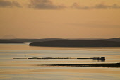 Salmon fish farm cages pink orange sunset Salmon Farm SCAPA FLOW ORKNEY  Picture Credit: Doug Houghton / Scottish Viewpoint Tel: +44 (0) 131 622 7174   Fax: +44 (0) 131 622 7175 E-Mail : info@scottish... Public sunset,salmon,fishfarm,aquaculture,fish,cages,uk,farm,pink,orange,scapa,flow,orkney,fishfarming,business,aquacultural,farming,farms,fishfarms,fishery,industry,fishnets,fishing,nets,net,netting,fishnet