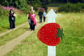 Strawberry picking at Cairnie Fruit Farm, near Cupar, Fife. Picture Credit: Chris Robson / Scottish Viewpoint Tel: +44 (0) 131 622 7174 Fax: +44 (0) 131 622 7175 E-Mail: info@scottishviewpoint.com Web... Public 2010,summer,sunny,people,pick your own,PYO,produce,farming,crop,local,food,eating,agriculture,soft,fruit,straws