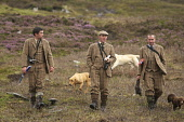Grouse keepers returning home after a shoot day on the moor, Highlands of Scotland. Picture Credit: John MacTavish / Scottish Viewpoint  Tel: +44 (0) 131 622 7174  Fax: +44 (0) 131 622 7175  E-Mail: i... Public, NMR people,shooting,sport,heather,dogs,tweed